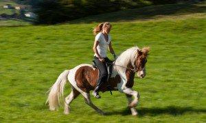 Reiterpaket für 4 oder 7 Tage