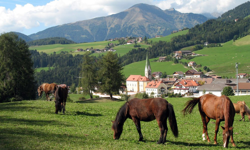 Experience a heavenly riding holiday at Hotel Wiedenhofer